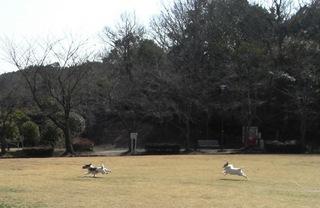 2008_0221ソラ君011.JPG
