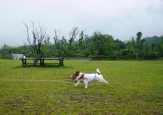 2008_0622雨04.JPG