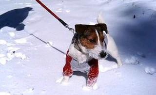 2007_0203雪山0342.JPG