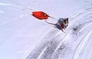 2007_0203雪山0343.JPG