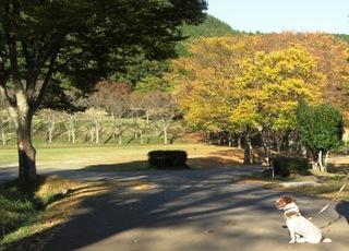 2007_1102温泉0074.JPG