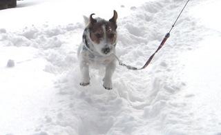 2007_1231雪遊び0053.JPG