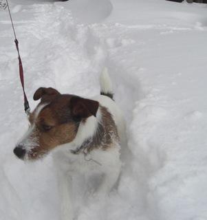 2008_0101雪遊び20145.JPG