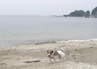 2008_0614海1.JPG