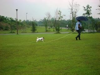 2008_0622雨1.JPG