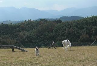 2008_11紅葉0273.JPG