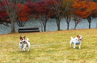 2008_11紅葉0334.JPG