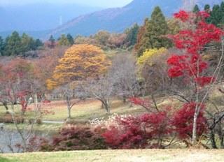 2008_11紅葉20025.JPG