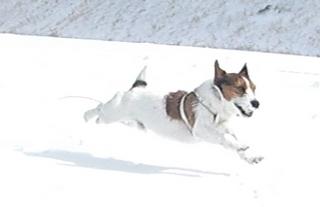 2009_0111雪0233.JPG