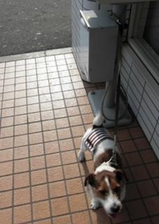 2009_01広場0004 -.JPG