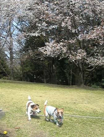 2009_0321tetsu0032 - JPG