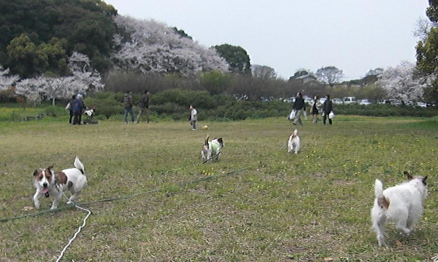 2009_0329tetsu0024.JPG