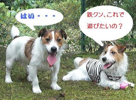 2009_0809tetsu0190 - コピー.JPG