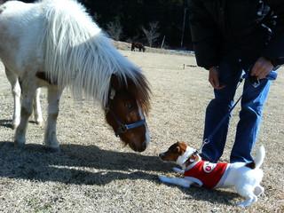 ponny.jpg