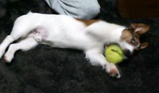 tenissball4.jpg